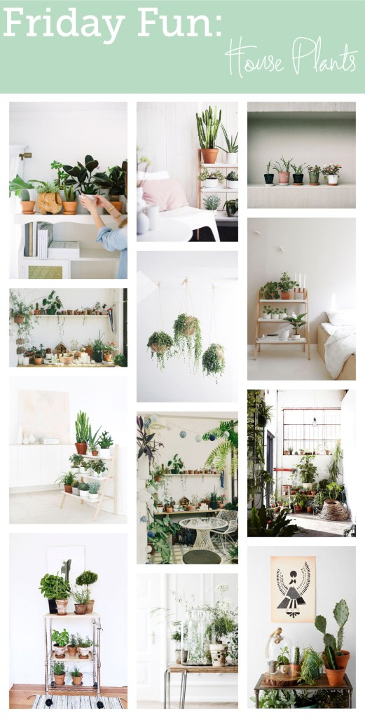 Friday Fun: House Plants