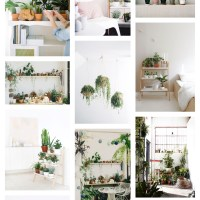 Friday Fun: House Plants