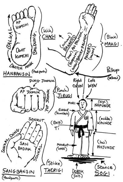 Hand and foot parts – Korean names