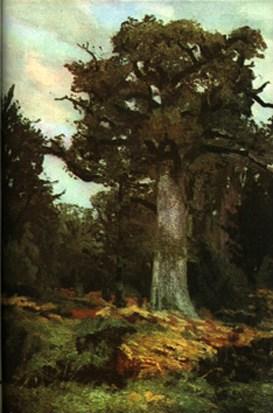 17 - Stejarul