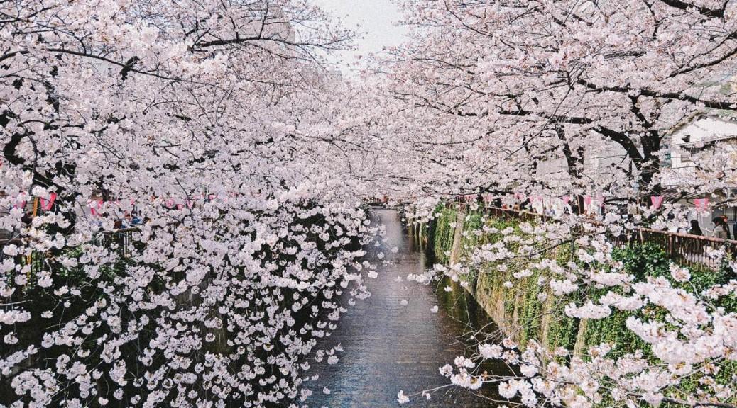 SEILIN NATURAL MARKET: Sakura Matsuri