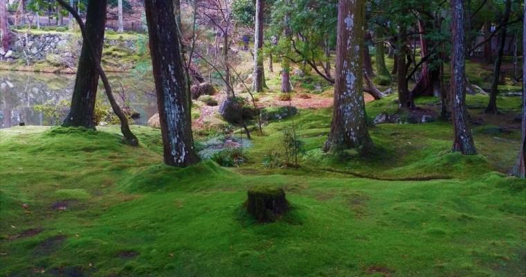 苔寺(こけでら)(Level: Intermediate1)