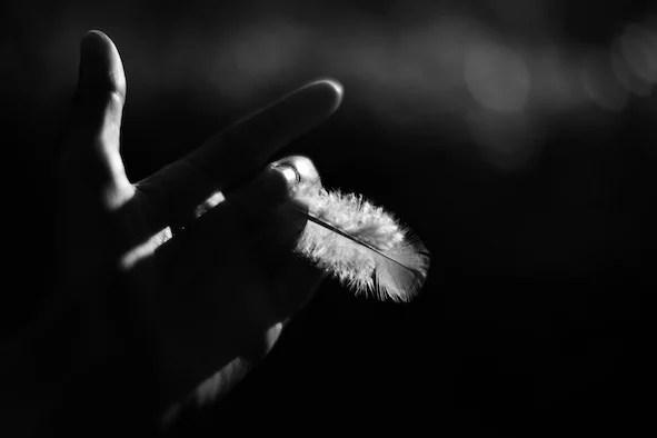 Feather 3 - Selina De Maeyer