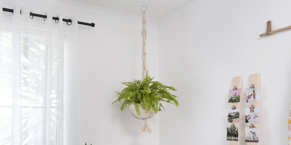 How To Hang Indoor Plants From The Ceiling Bunnings Warehouse