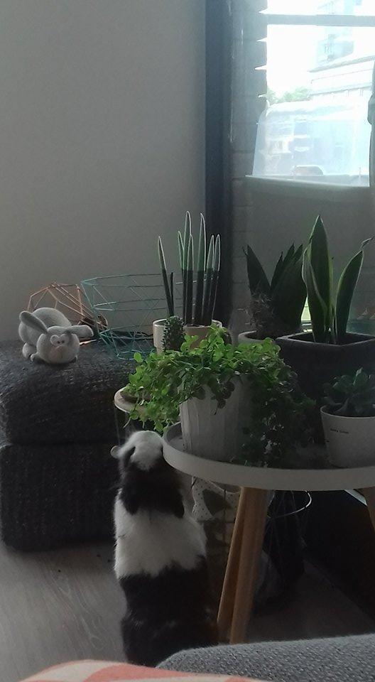 Veilige kamerplanten  Voeding  Bunnybunch Forums