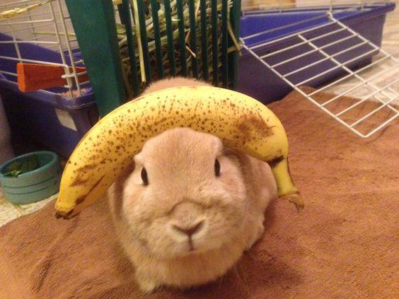 Can Rabbits Eat Bananas? - The Bunny Lowdown