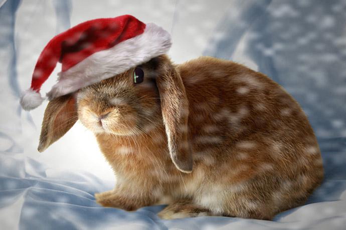 Cute Wallpaper Bunnies Cuteness Overload New Year Bunnies Gallery 15 Photos