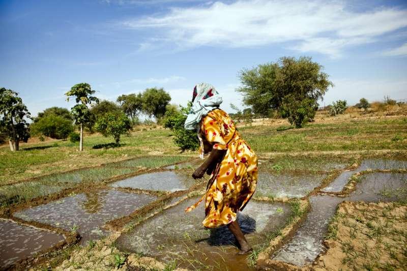 La banca dei cereali di Mongo in Ciad