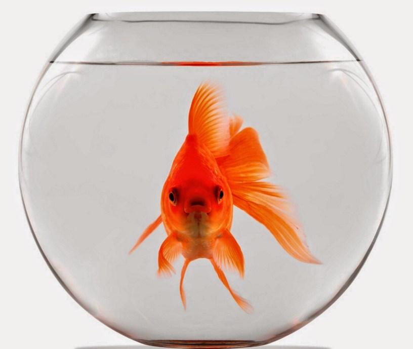 L'Europa è come un pesce rosso in una boccia di vetro