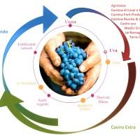 """Nasce """"Legàmi di Vite"""", un importante contratto di sviluppo """"green"""" nel comparto vitivinicolo"""