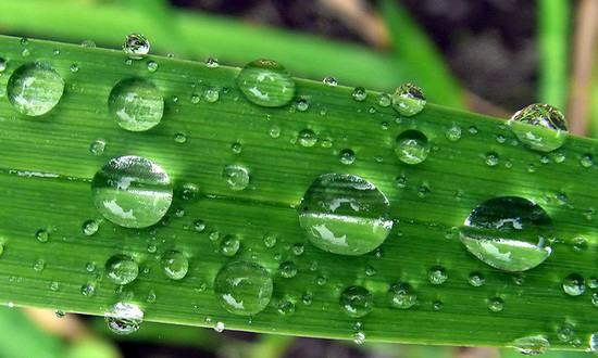 ambiente-clima (fotoEvanLeeson@flickr)