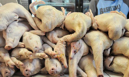 Industria alimentare: animali da macello in Polonia alimentati a farina di carne vietata dall'UE