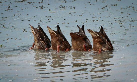 uccelli acquatici (carterse@flickr)