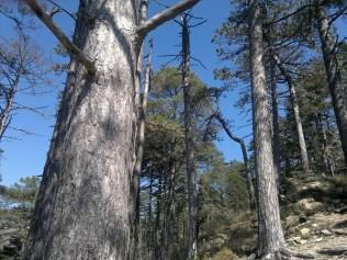 I boschi di Punta Martin sui Monti su Riviera di Ponente ligure