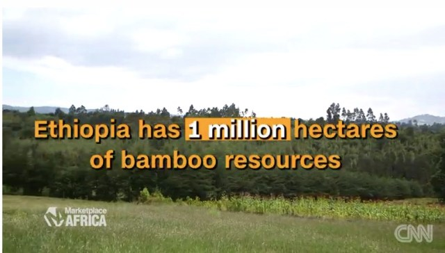 Ethiopia has 1 million hectares of bamboo resources.