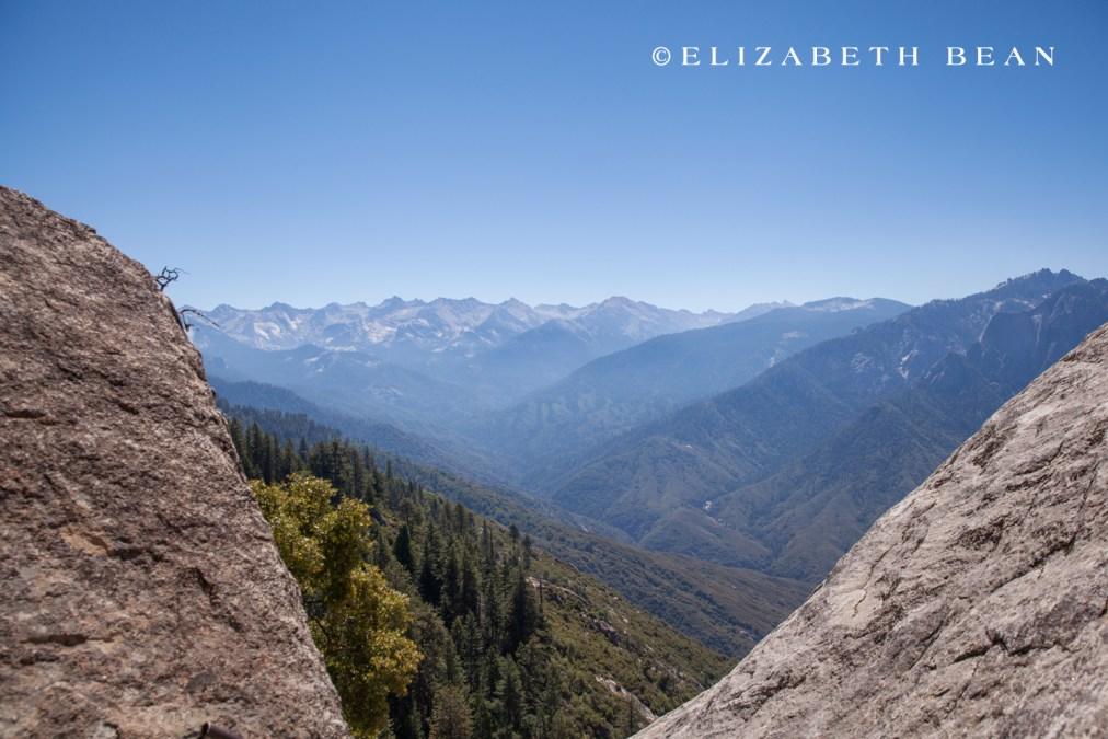 070214 Sequoia 12