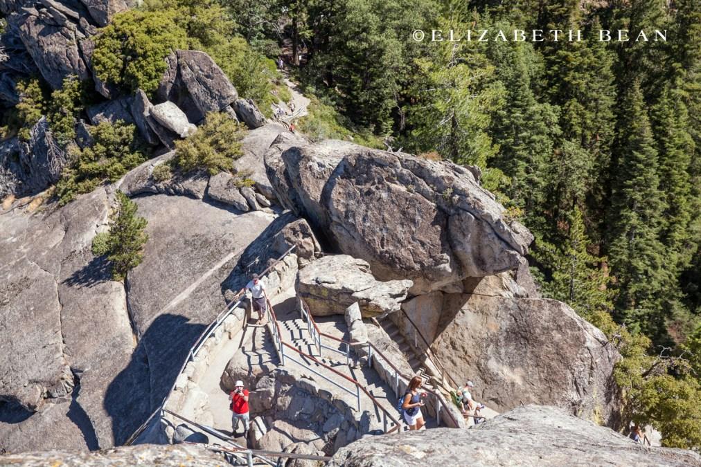 070214 Sequoia 14