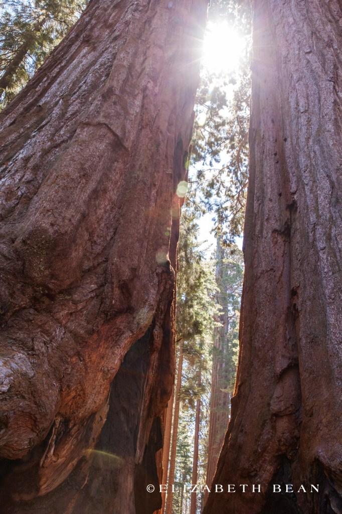 070214 Sequoia 34