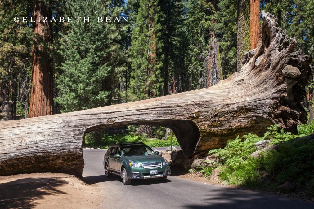 070214 Sequoia 38