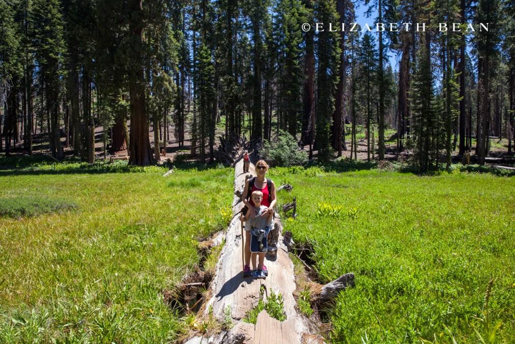 070214 Sequoia 48