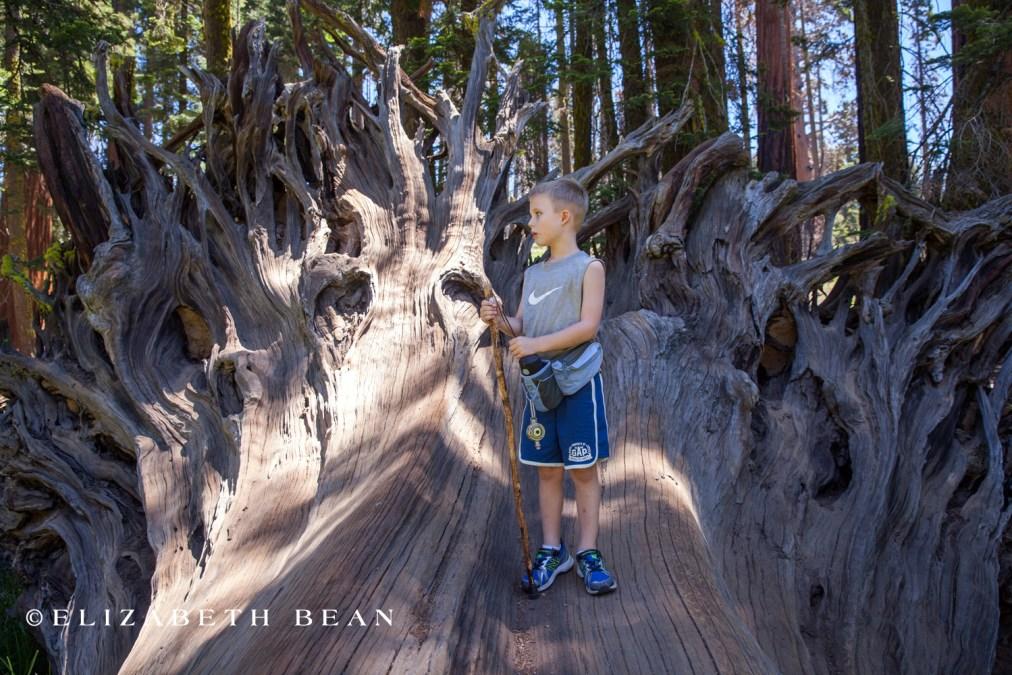 070214 Sequoia 50