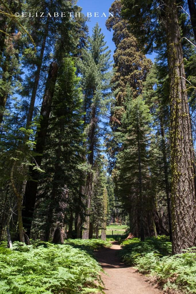 070214 Sequoia 56