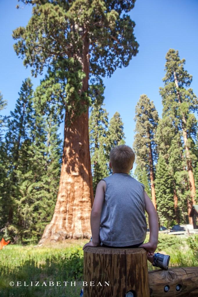 070214 Sequoia 72