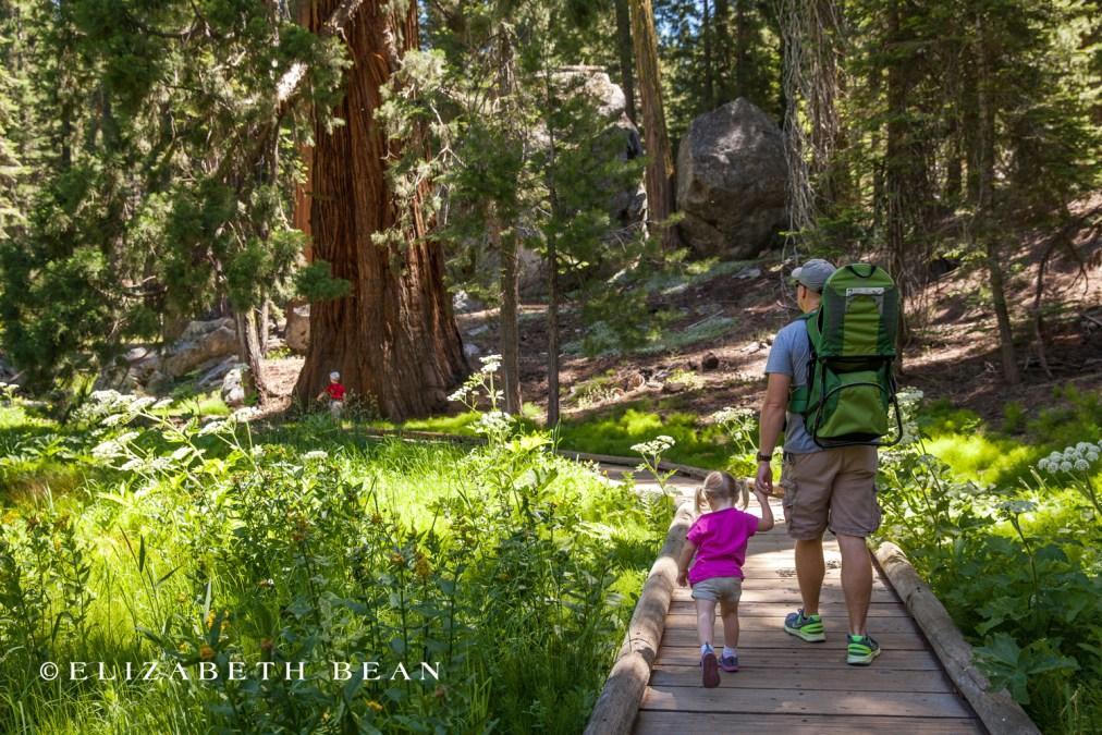070314 Sequoia 22