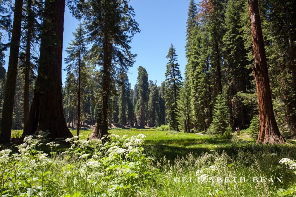 070314 Sequoia 30