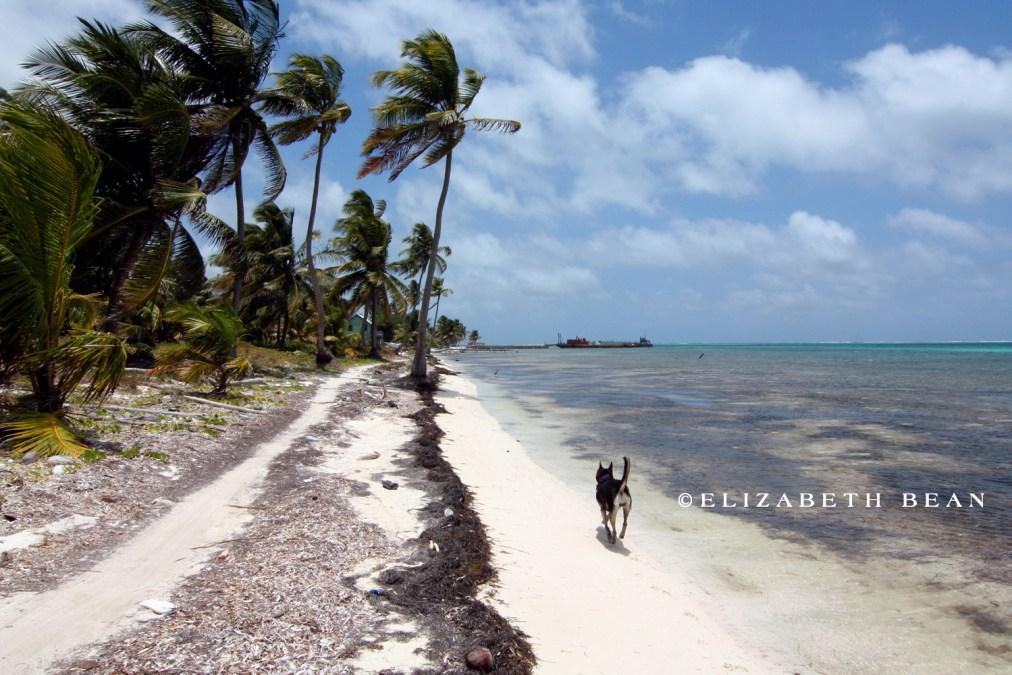 Ambergris Caye ~ Belize