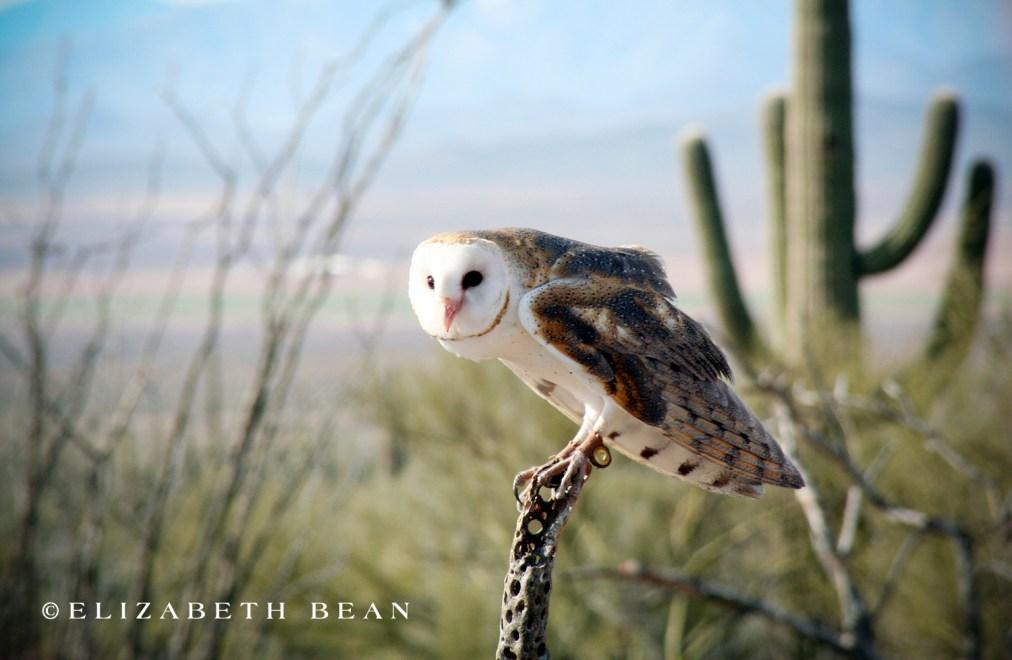 012807 Tucson 12