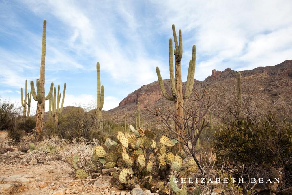 122412 Tucson 38