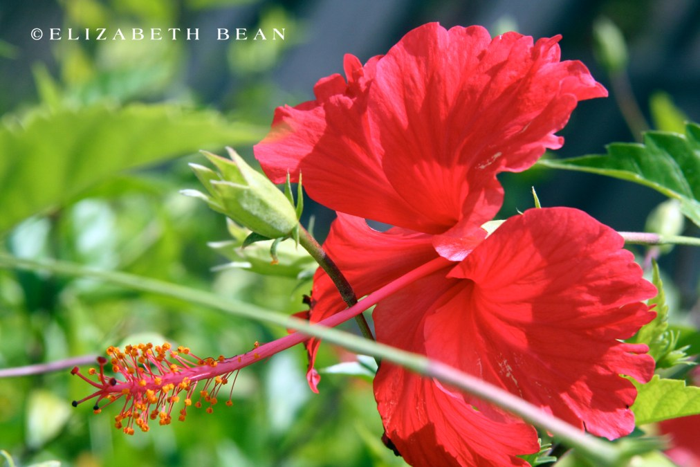 050407 Belize 61