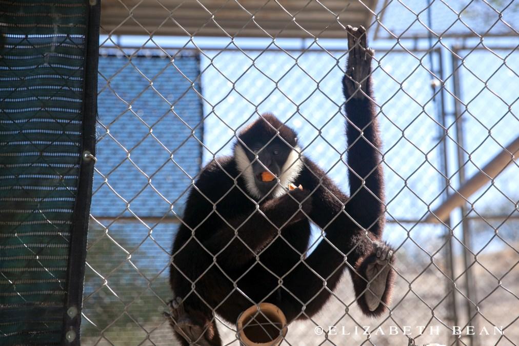 071215 Gibbon Center 25