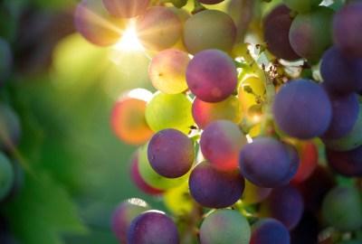 vin bio vs vin biodynamique