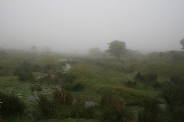 Bodmin Moor im Nebel