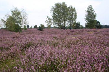 Wilde und unberührte Natur in Westfalen
