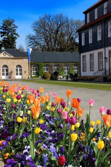 Tulpen, Trinkhalle, Gräflicher Park, Bad Driburg