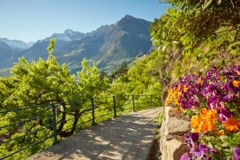 Eine Promenade über den Tappeinerweg zur bunten Frühlingsblüte