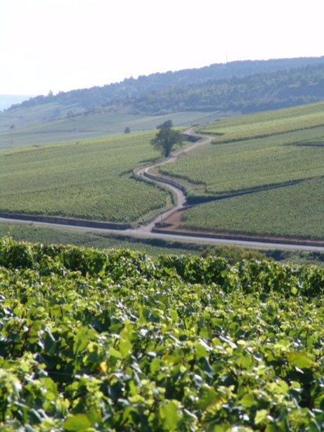 From Pernand - the road to Savigny...