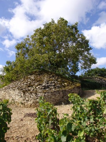 Fantastic murger and walnut tree
