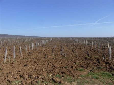 The flatlands of Romanée St.Vivant