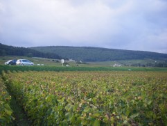 Bourgogne-Roncevie-below-RN74-arguably-should-be-Gevrey-Village-looking-towards-Clos-de-Beze