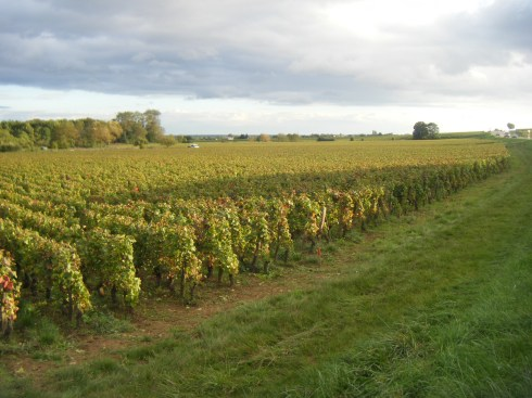 Super-shot-that-really-pleases-me-of-Bourgogne-Roncevie-plot