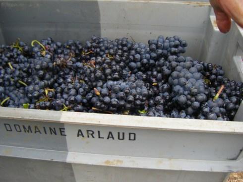 Vosne Village fruit in case