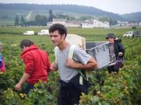 Porteur Romain Arlaud with longtime vendangeur Dede behind