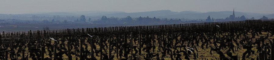 Burgundy Report Extra! (1/2)