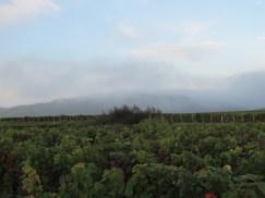 A vers NSG mountain telephone mast hidden in fog