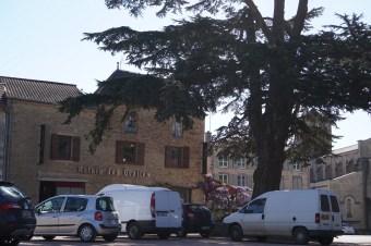 The cedar tree in Azé