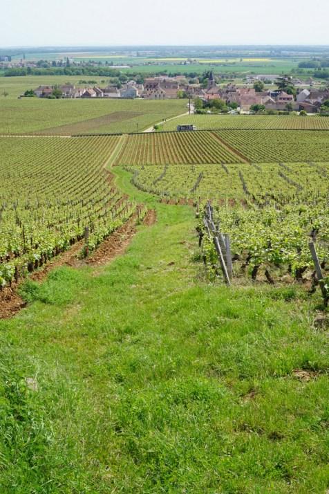Left Richebourg, right Romanée-Conti